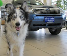 Twin City Subaru is dog-friendly, as all Vermont Subaru Dealers should be!
