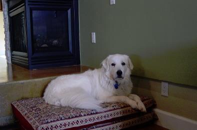 Phoenix Dog Adoption
