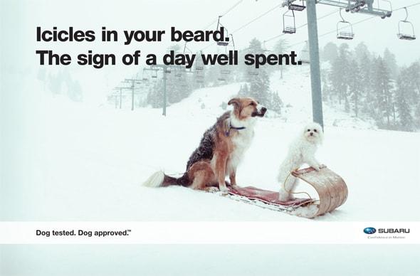 Dog tested and pet approved burlington subaru vt