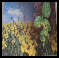 Photo of Nature Artwork, Toyota Dealers, Michigan - Dunning Toyota