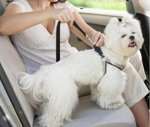 Dog Car Safety Tether
