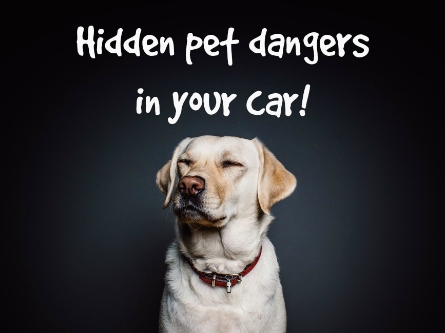 Orlando Toyota pet tips