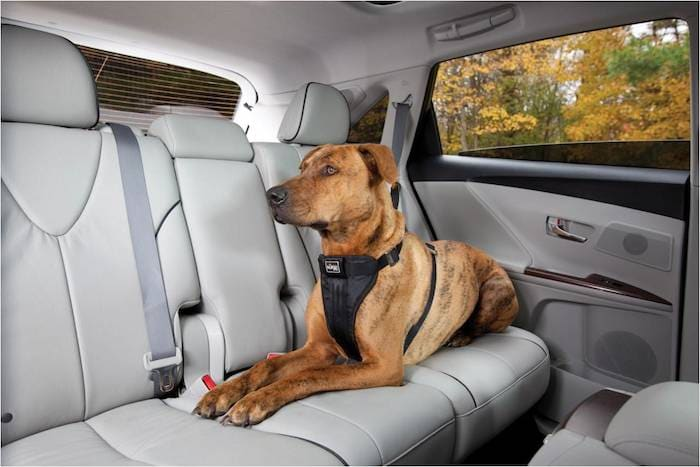Toyota of Orlando pet safety tips