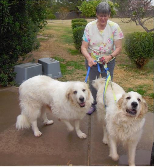 Phoenix Dog Adoptions