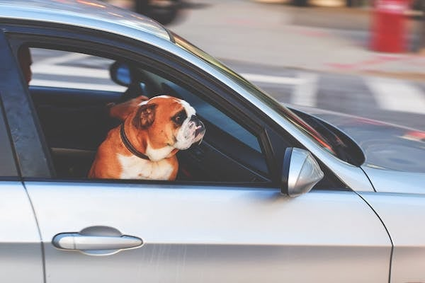 Apple Ford Lincoln Traveling With Your Pet