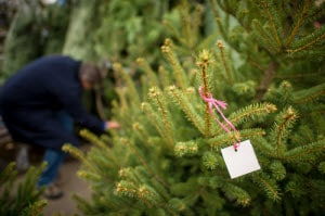 Perfect Christmas Tree Shops Near Wilmington De Audi Of Wilmington
