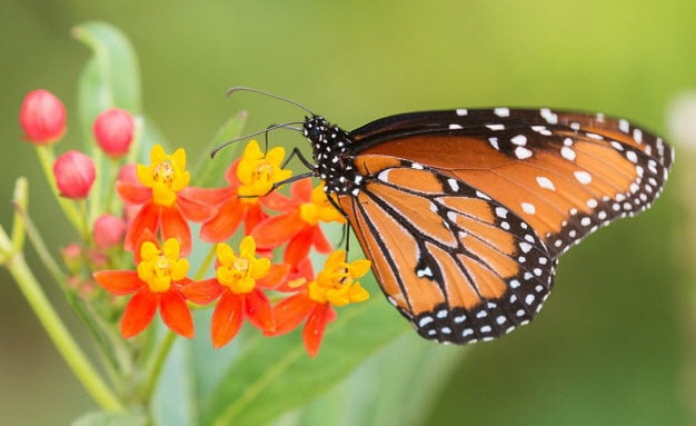 Fall Butterfly Exhibit At The Desert Botanical Garden   Honda Events    Phoenix AZ