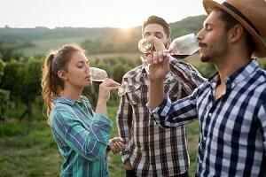 Vineyard in Annapolis