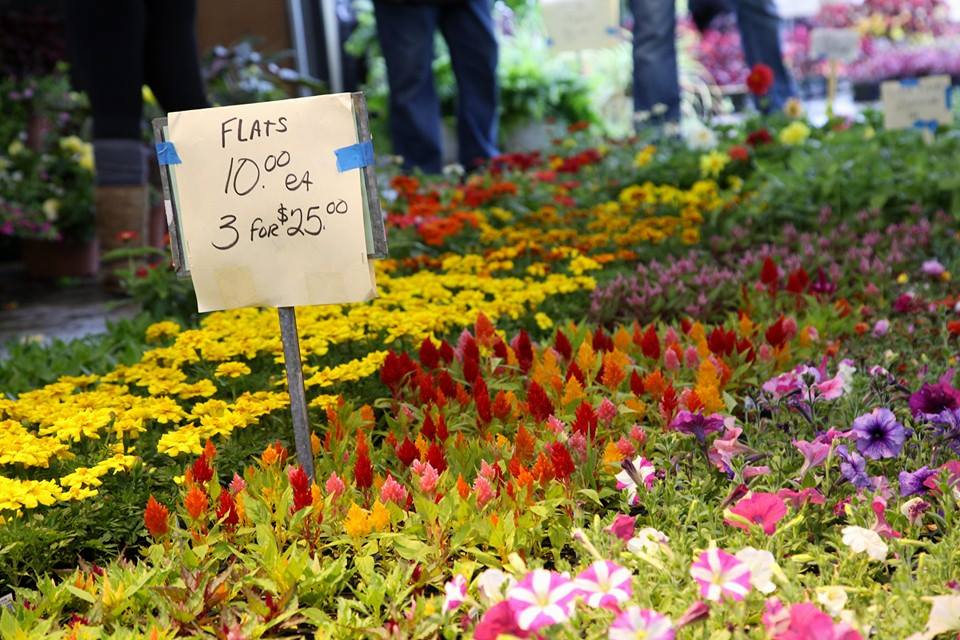 Brighton Ford | Looking for a nearby farmers market? Here