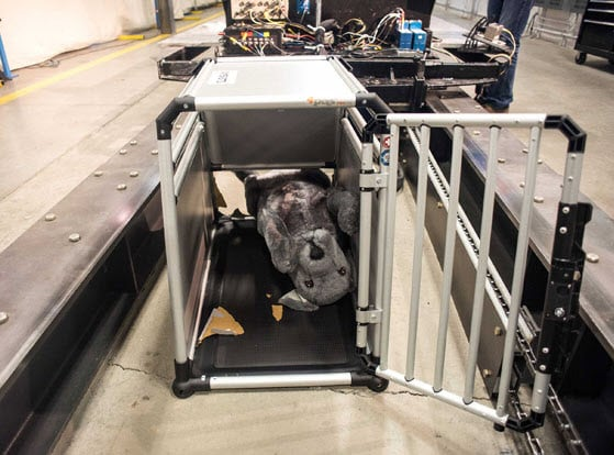Pet Crate  Carrier Crash Test Study Results Are In