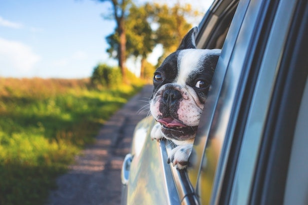 How to Travel Safely With Your Pets