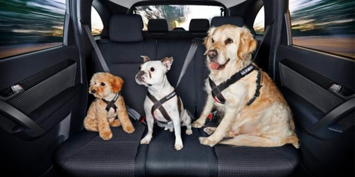 RI Dogs In Vehicle Laws