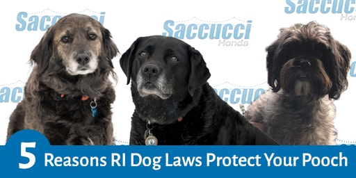 5 Reasons RI Dog Laws Protect Your Pooch