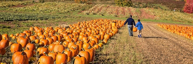 Pumpkin patch in holmdel, new jersey? Carve out a smile.