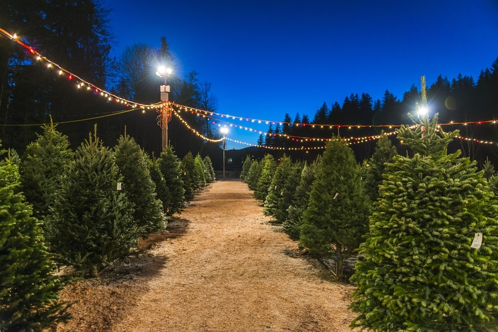 Christmas Tree Farms near Rochester NY. With the holidays coming up, it's  time to get in the Christmas spirit. That means putting on your favorite  Christmas ... - Christmas Tree Farms Rochester NY Friendly Ford