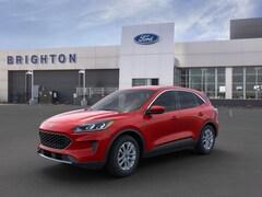 New 2020 Ford Escape SE SUV for Sale in Brighton, CO