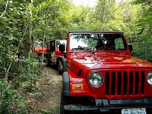 The Jeep Wrangler Jungle