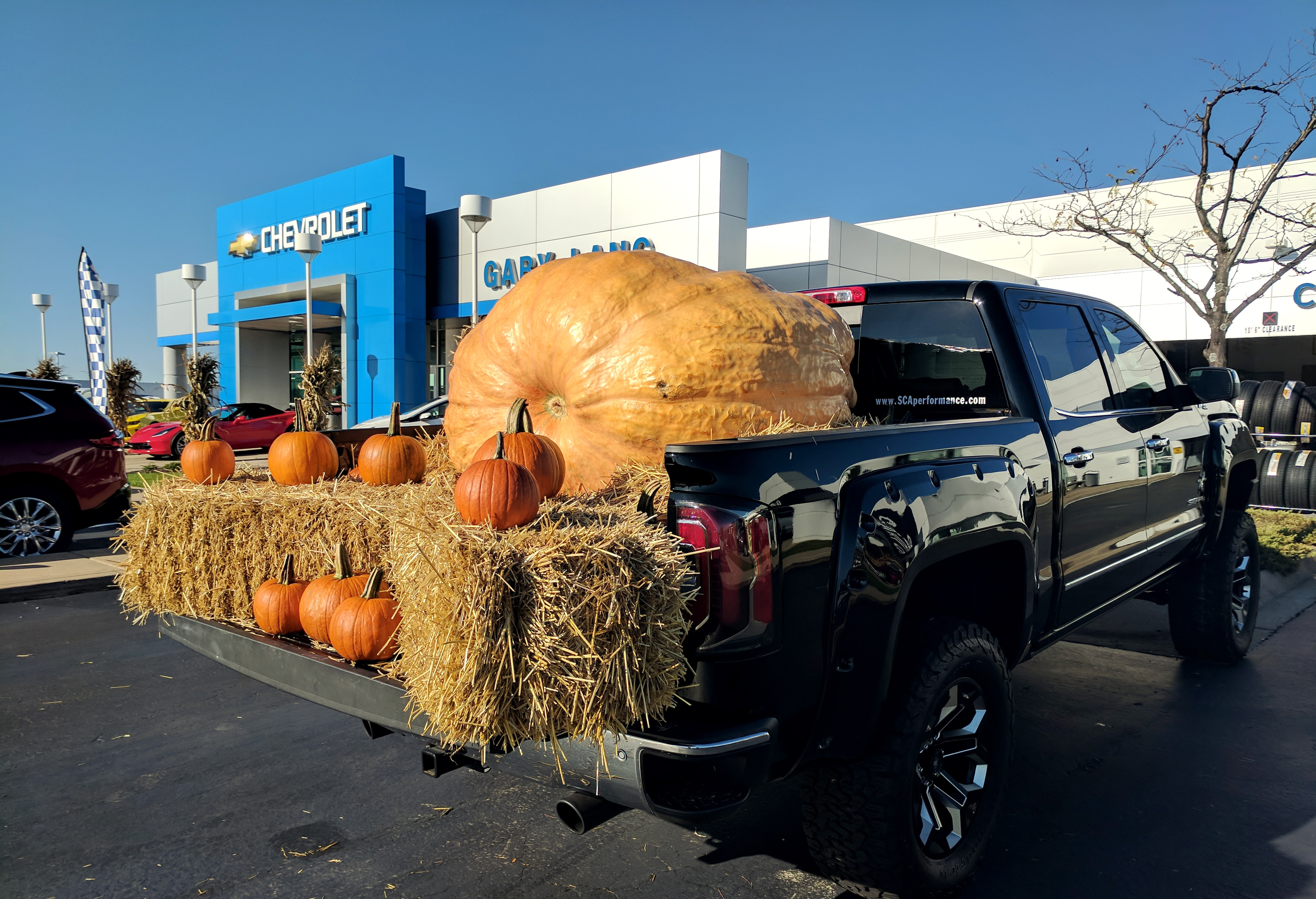 Gary Lang Giant Pumpkin | McHenry, IL