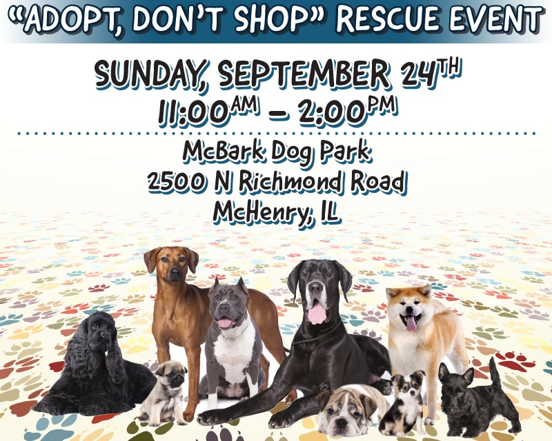 Dog Rescue Event in McHenry, IL | Gary Lang Subaru