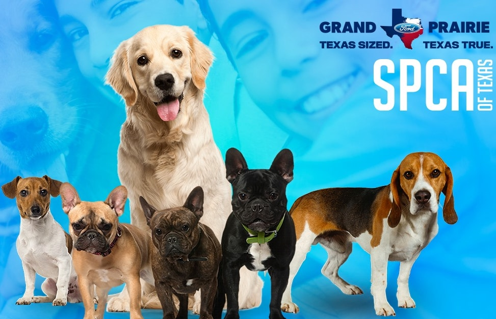 Pet Adoption in Dallas Area