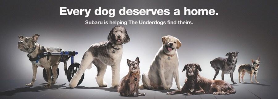 Subaru Loves Pets Underdogs