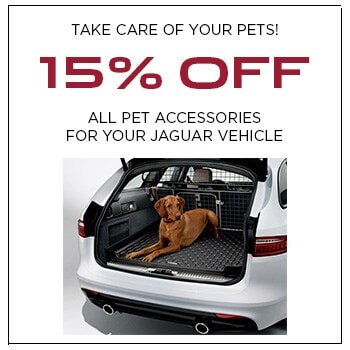 All Pet Accessories