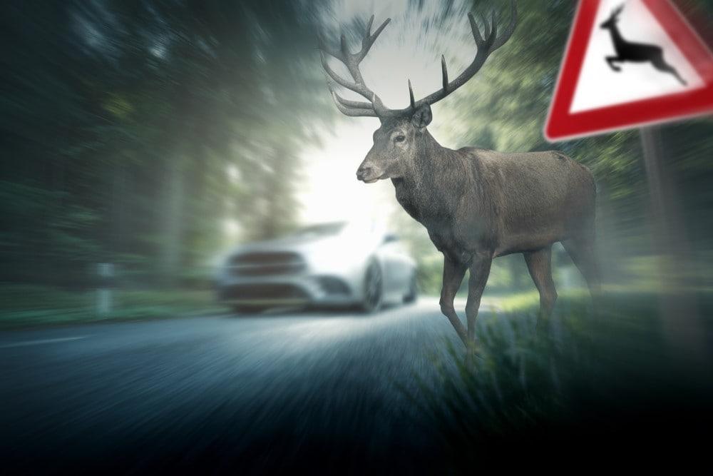 Driving During Deer Season