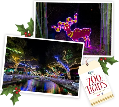 Celebrate The Holiday At Houston Zoo Lights