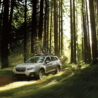 Subaru Outback in forest