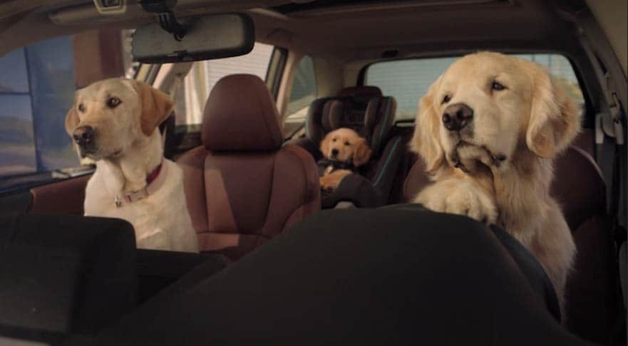 Subaru Outback Dog Lovers