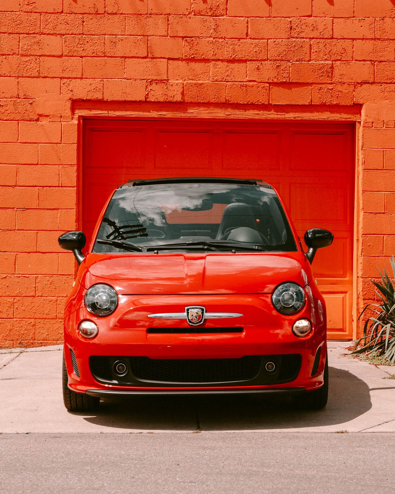 Which Color FIAT Should You Take to School?