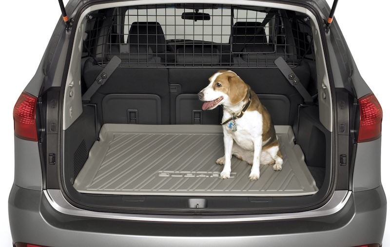 dog-friendly Subaru accessories available near Winter Park