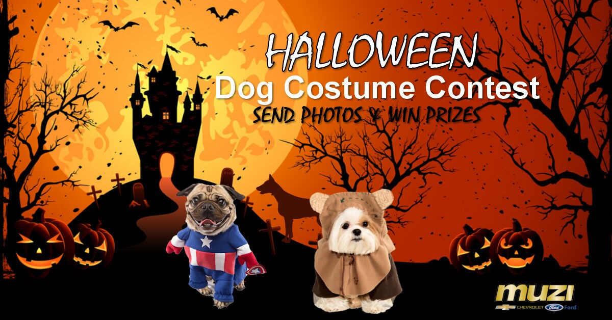 muzi mutts dog halloween costume contest