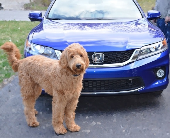 New Honda For Sale Near Hicksville