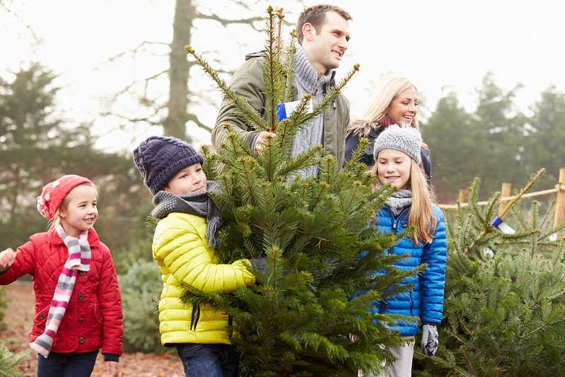 Tips for Transporting a Christmas Tree