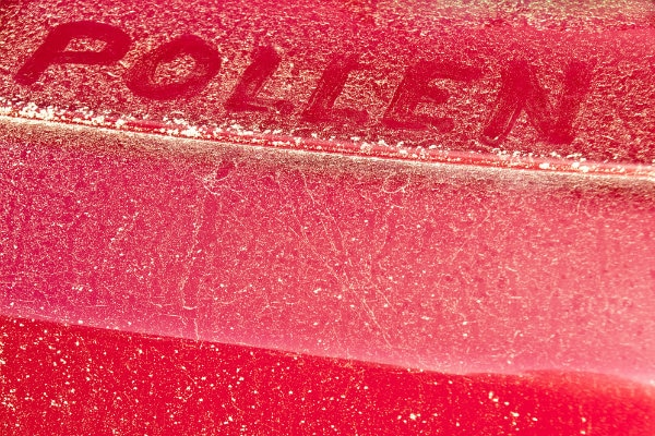 Pollen collected on vehicle