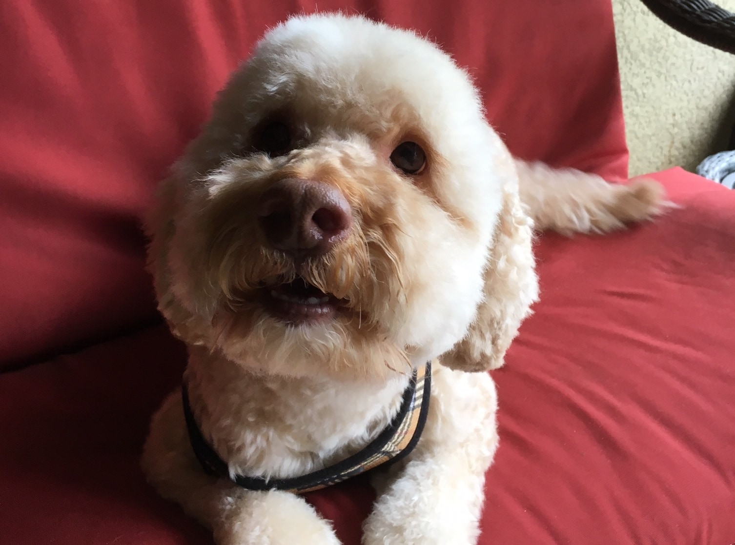 Pet Rescue & Adoption near Central FL