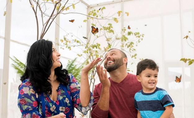 Fall Butterfly Exhibit
