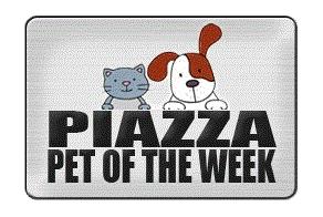 piazza pet of the week piazza honda of philadelphia. Black Bedroom Furniture Sets. Home Design Ideas
