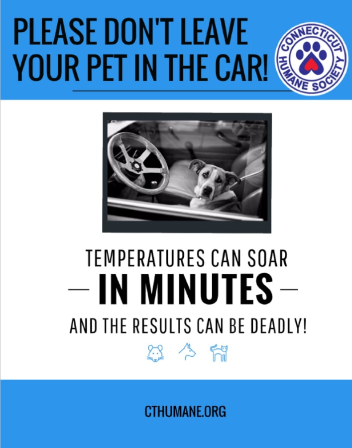Don't leave your pets in a hot car