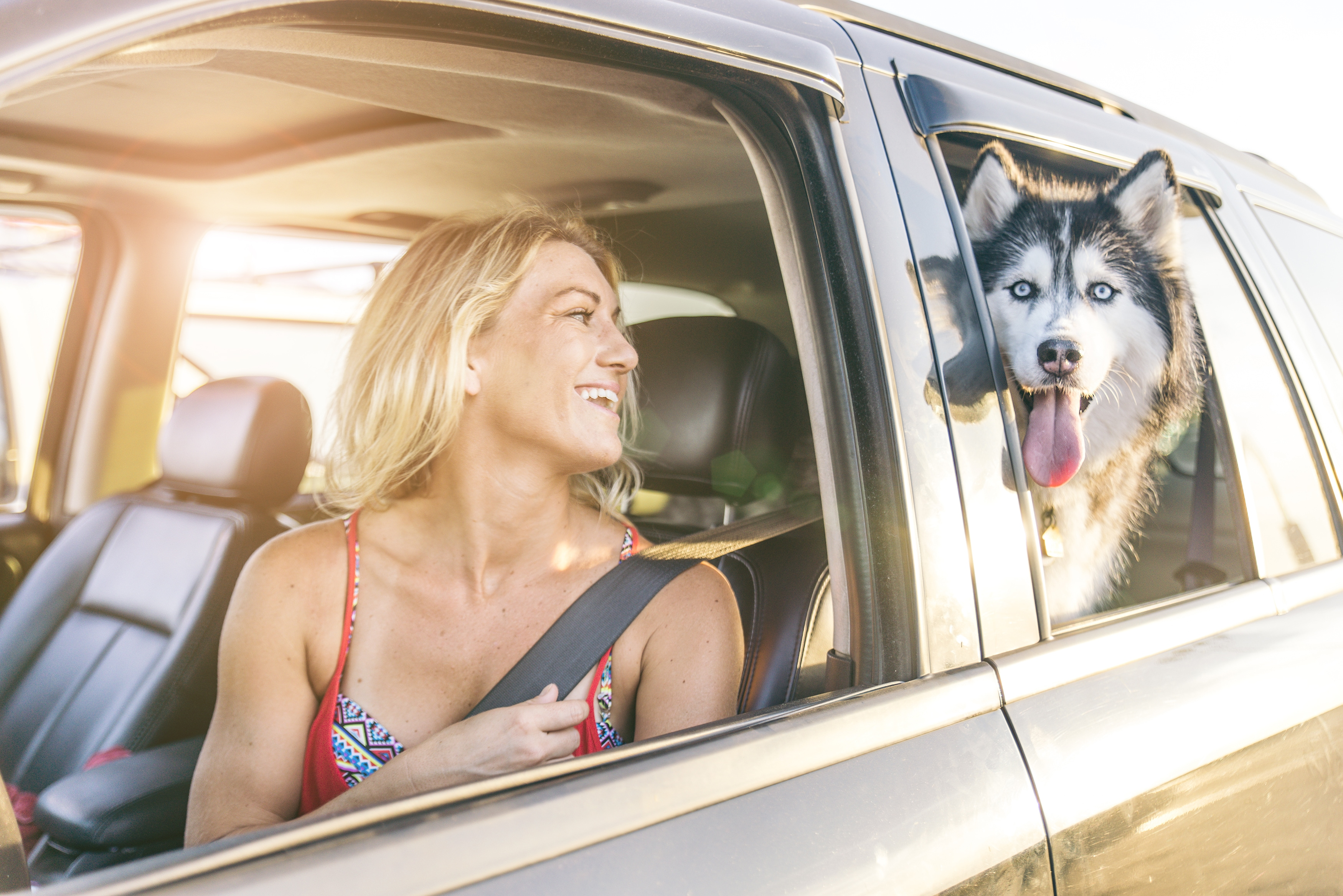 traveling with dogs in car tips