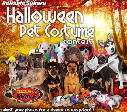 & Enter Your Dog in Reliable Subaruu0027s Halloween Pet Costume Contest