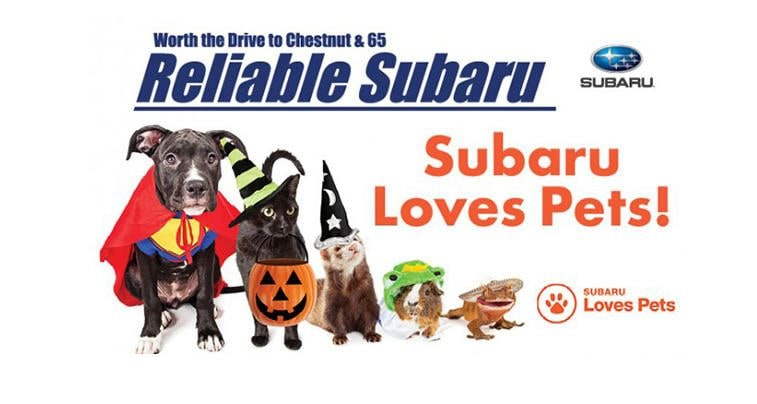 Pet Adoption and Halloween Costume Contest