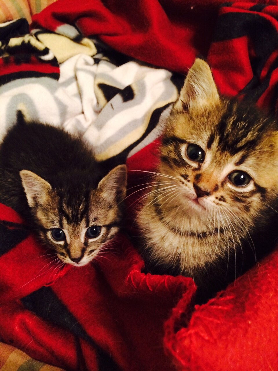Basket of  Kittens donated to Marley's Mutts