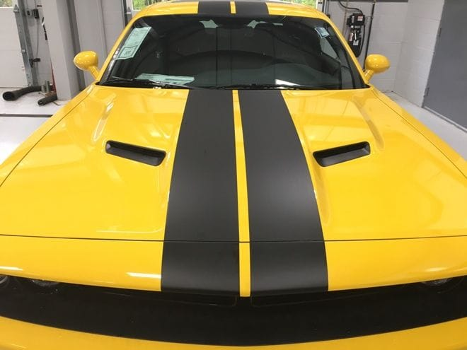 BumbleBee_Stripe full.jpg