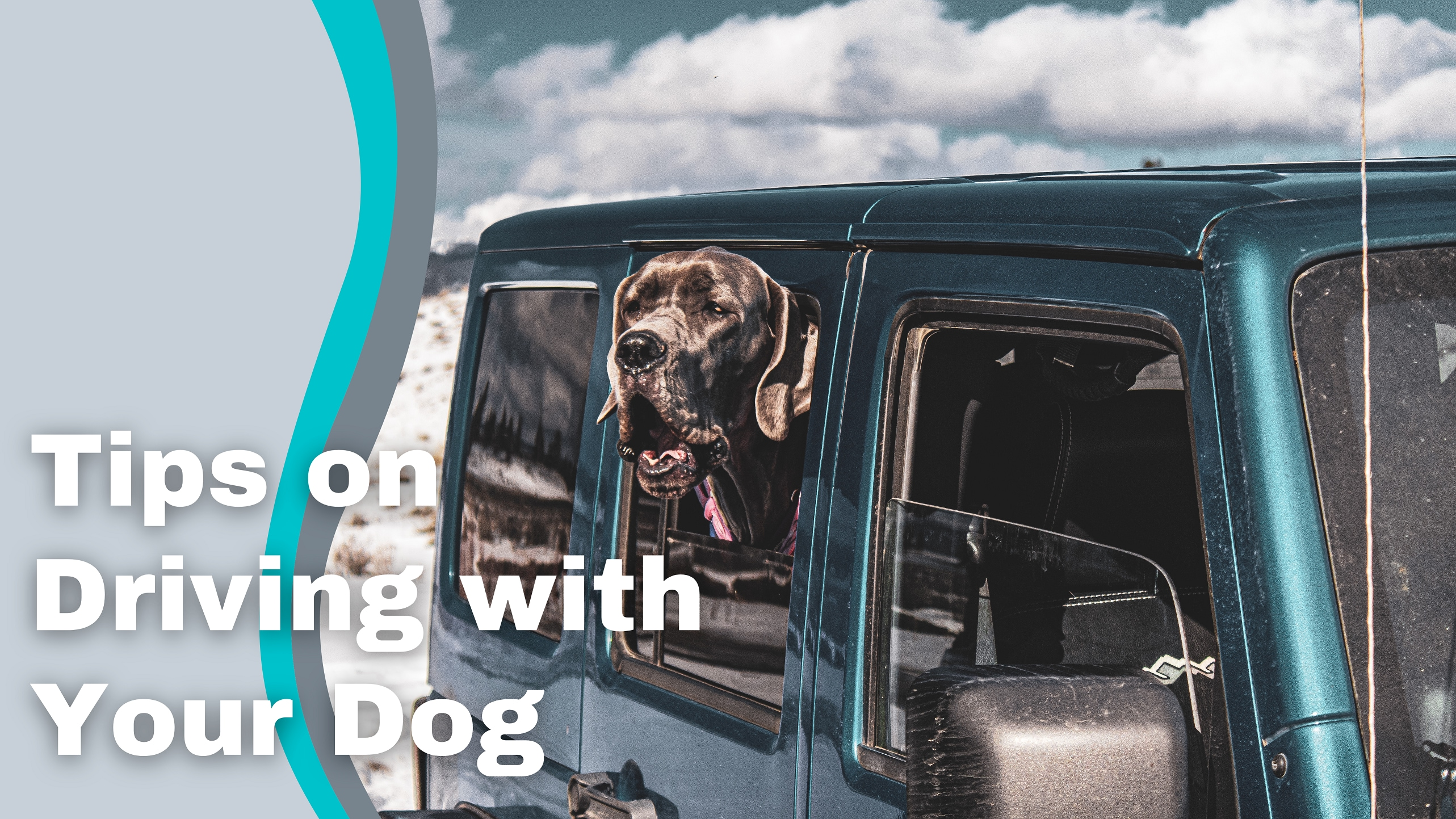 Dog sticking head out of teal Jeep window