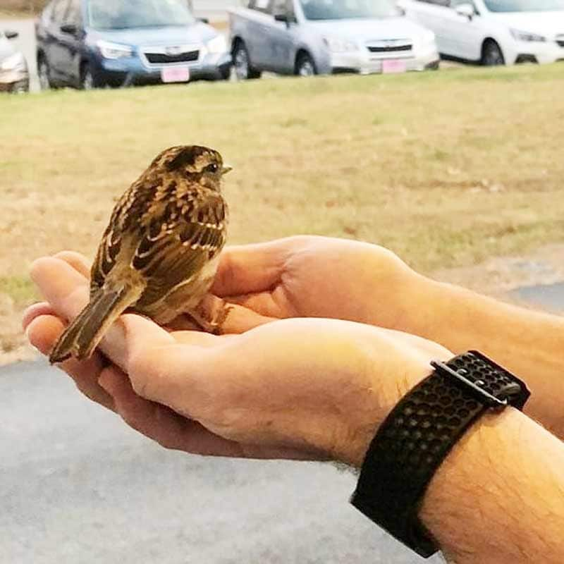 the sparrow in hand, getting ready to leave