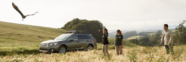 An Outback in rolling hills of tall grass while three people look on at a nearby bird of prey in flight