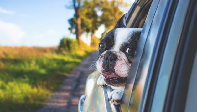 Protecting Your Pets in the Car
