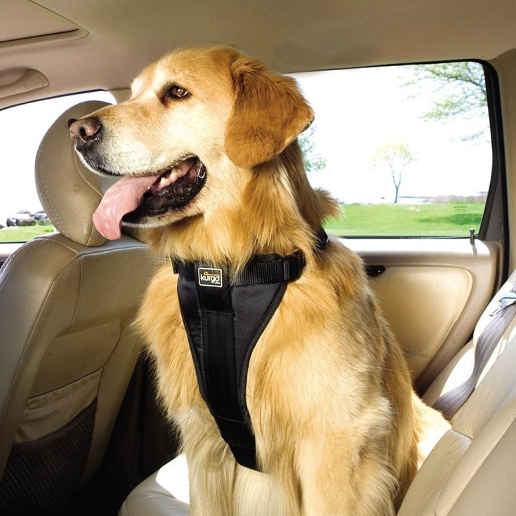 new Toyota pet safety